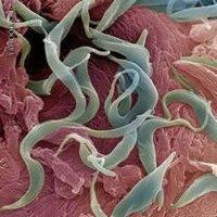 Энтеробиоз: как отразить нападение остриц?